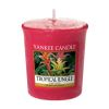 BOUGIE PARFUMEE VOTIVE JUNGLE TROPICALE - YANKEE CANDLE